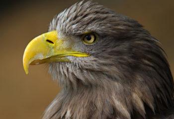 Centar za zaštitu ptica grabljivica Grifon 2