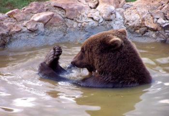 Velebit sanctuary for young bears Kuterevo- (3)